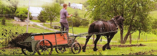 Horse Manure Spreader : Manure spreaders